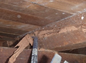 Image of termite damage detected during timber pest inspection report conducted in Bunbury, termite inspection required for home purchase. Termite Inspection Reports to Australian Standard AS.4349-2010.